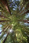 Over 14 acres of Redwood Forest
